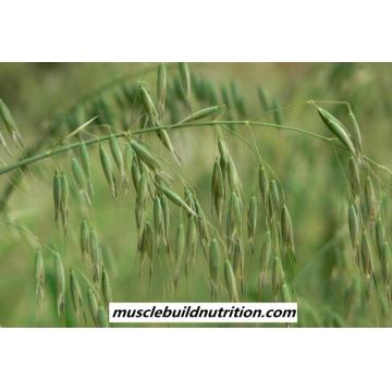 Oat (Avena sativa) Extract